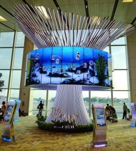 Changi Airport_social tree