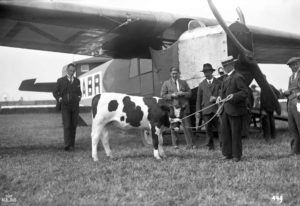 KLM, 1924 yılında bir boğa taşıyarak bu konuda bir ilke imza atmıştı.
