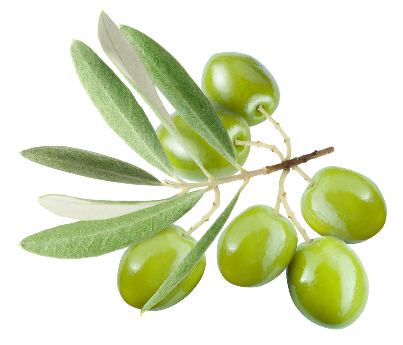 American Airlines_olive_zeytin
