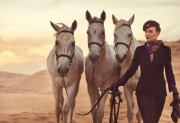 Etihad Airways_new brand_new uniform_Dec 2014_horse